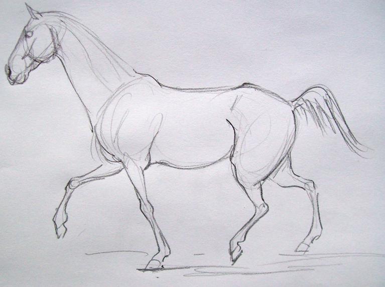 Curso Gratis De Desenho De Cavalos, Www.portalcursos.com